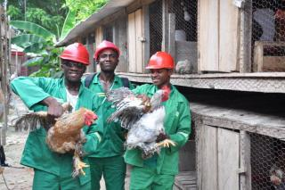 Agriculture HND: Animal Production #1