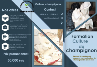 Formation culture champignons