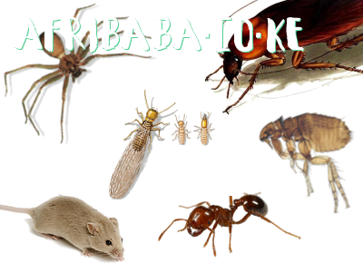 Safe Homes, pests control, cockroaches, bedbugs, rats control msa #1