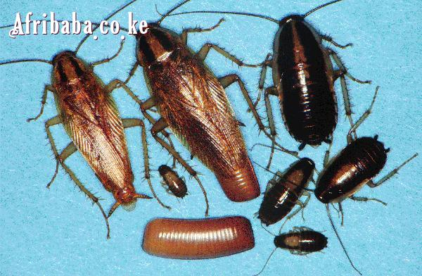 Home solutions bedbugs, cockroaches termites exermination #1