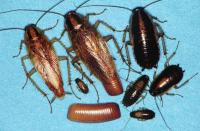 homecare total pests control against bedbugs, cockroaches , rats etc