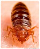 Eliminate, protect your premises from cockroaches, termites, bedbugs etc #1