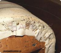 Reliable bedbugs, cockroaches, termites Exterminators Mombasa...