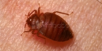 Bed Bugs, Cockroaches, Termites ,Rats control Services; Pest control