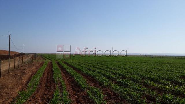 Ferme 27hectares a oulad omrane #1