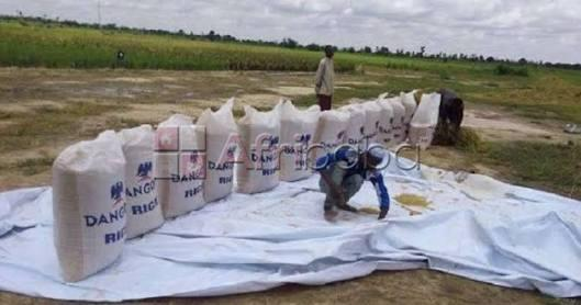 Dangote Rice hits the market with selling price  #1