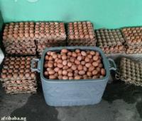fats eggs for sale
