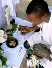 The real best powerful native doctor and herbalist in nigeria