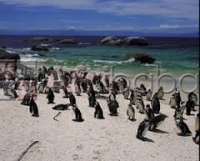 CAPE TOWN AND CAPE PENINSULA SAFARIS