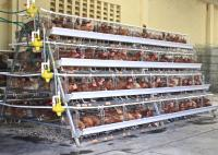 Layer chicken cages / Poultry