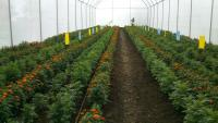 Irrigation and Green House Supplies