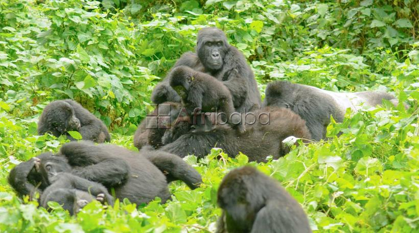 uganda safaris, air ticketing   events planning, tour pac #1