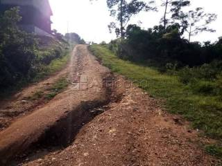 Two plots of land for sale in nsube-nabuti, mukono