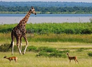 uganda safaris, air ticketing   events planning, tour pac