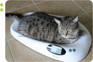 Efficient Cat In- Balance Weighing Scales in East Africa