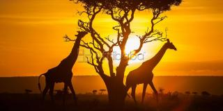 Uganda Safaris, Air Ticketing   Events planning, Tour pack