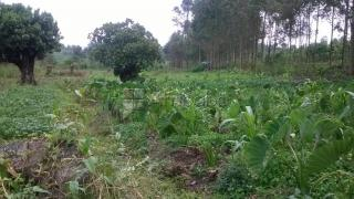 3 acres of titled land for sale in Fort Portal town
