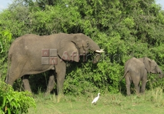 uganda safaris, air ticketing   gorilla trekking, tour pa