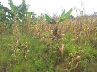 Land for sale at Gomba