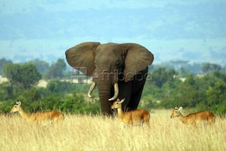 uanda safaris, air ticketing   gorilla trekking, tour pa