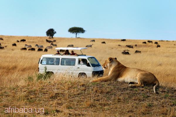 24/7/365 Kenya Tanzania Adventure safari tour 2015/16 #1