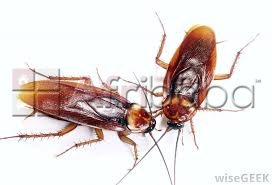 Affordable fumigation services  #1