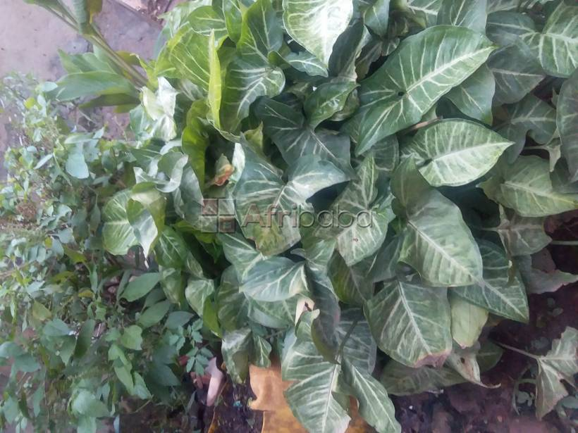 Traditional healer with quick results proff kawanga