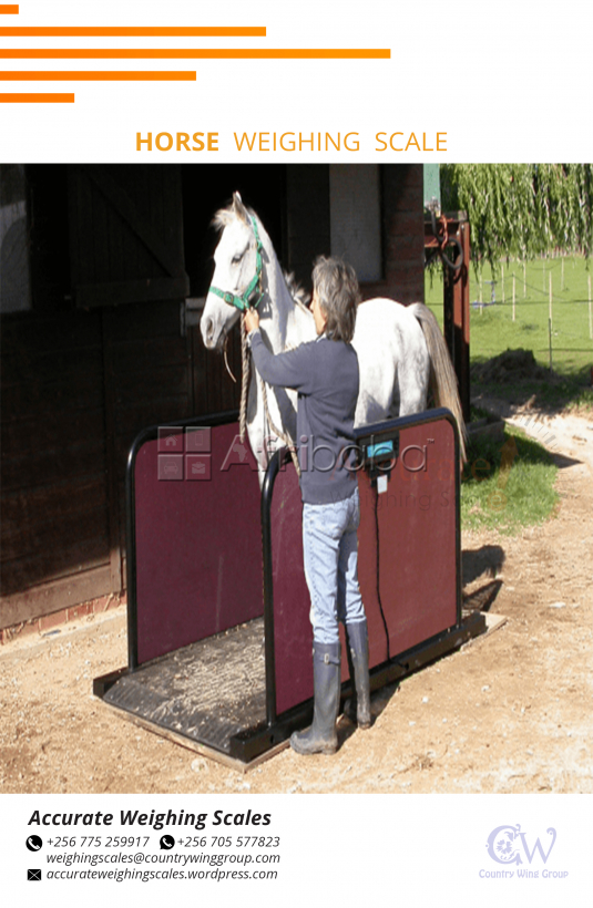 Livestock weighing scales with heavy duty leads that have dust proof