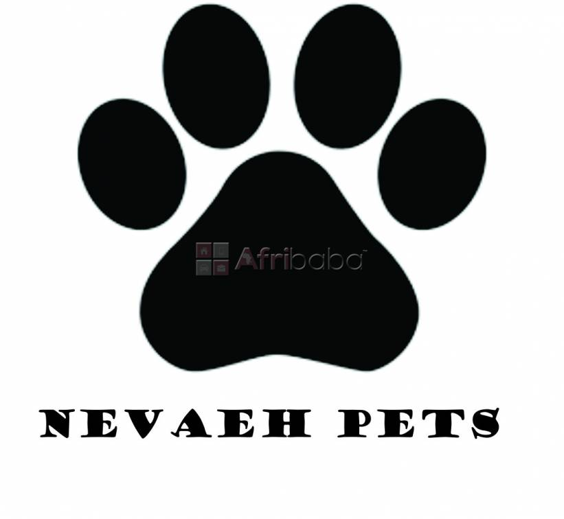 Pet furniture and accessories #1