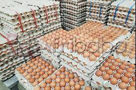 Suppliers of Livestock, Cattles, Sheeps, Pigs, Chicken/Eggs etc.