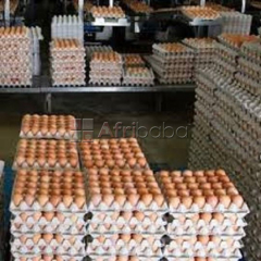 We have Cattle, Goats, Sheep, Pigs, Chickens, Eggs, Available for sale