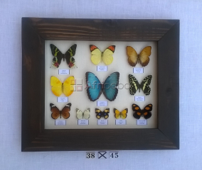Rustic frame with real butterflies