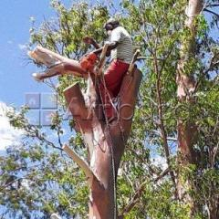 Fully Insured and professional tree felling