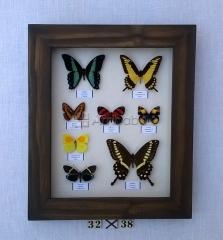 Frames with real butterflies