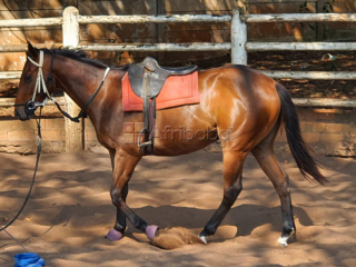 Racehorse for investment - tothelefttotheleft