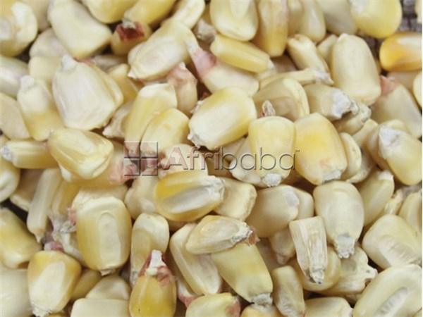 Soya beans and Maize for sale #1