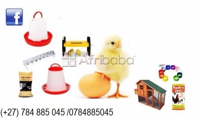 Chickens and Poultry products available at good prices #1