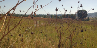 Residential land for sale in the Grange.